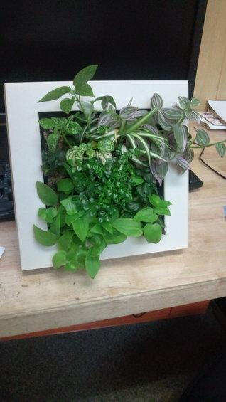 額縁タイプの室内緑化「草窓sousou」のバージョンアップパーツが完成しました。